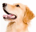 Gratis Biofood probeerpakketten voor je hond en/of kat!