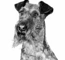 Gratis A-merk hondenvoer + €3 cashback