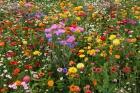 Gratis actiepakket en bloemzaadjes